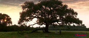 دانلود فیلم انگیزشی فارست گامپ Forrest Gump | دوبله فارسی با کیفیت عالی